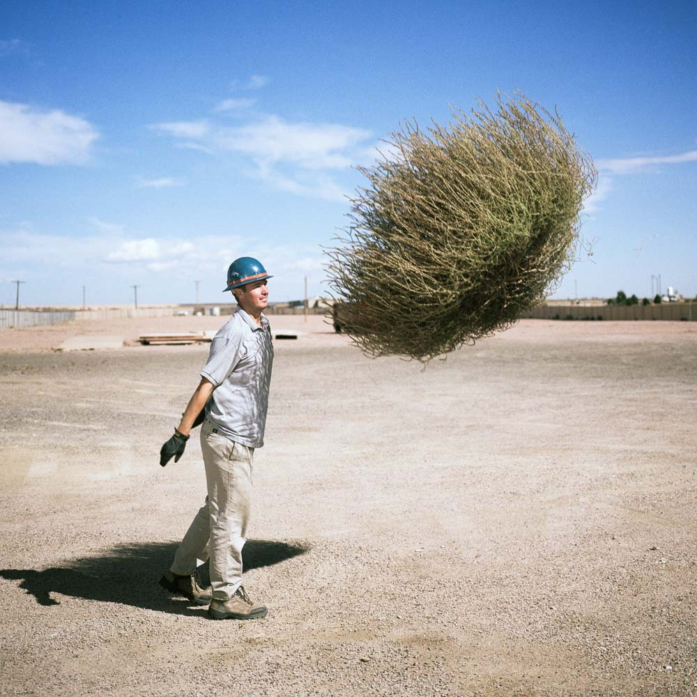 Man throws large tumbleweed