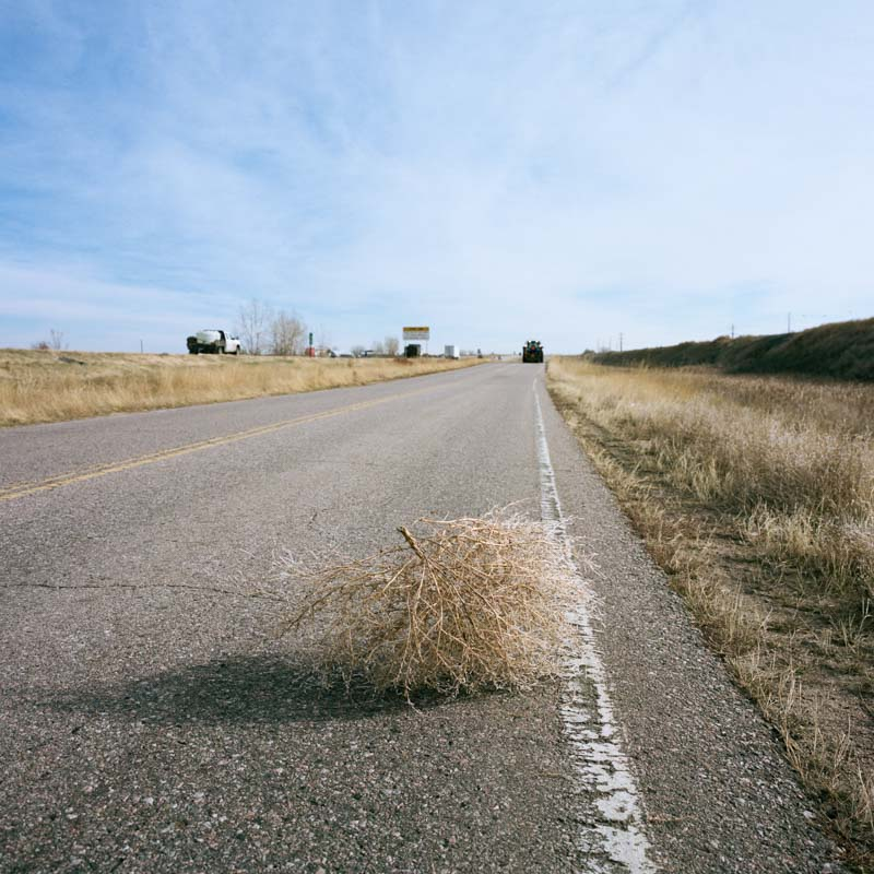Tumbleweed in road