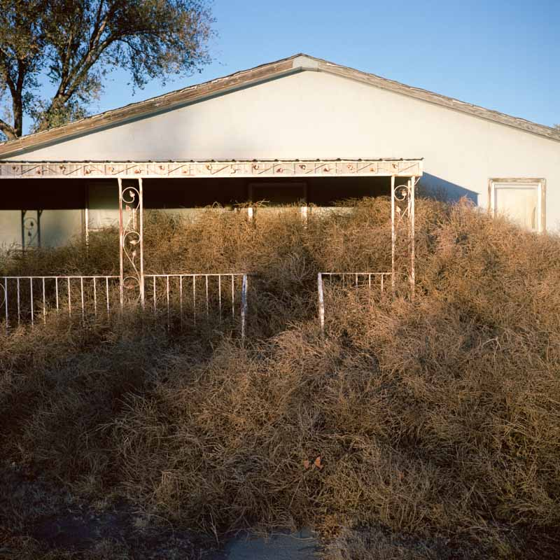 House buried in tumbleweed