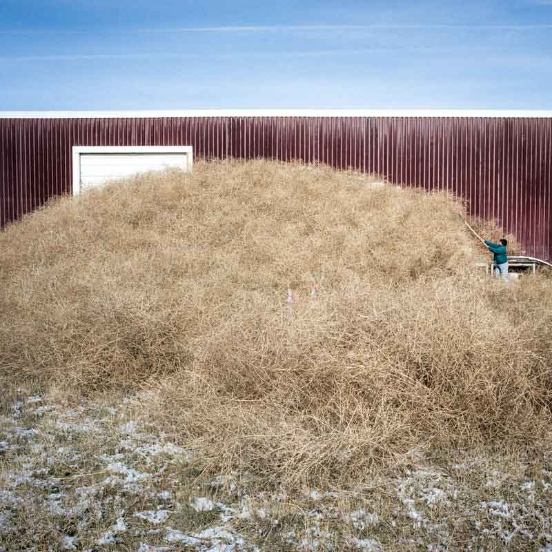 Woman shovels tumbleweeds from barn