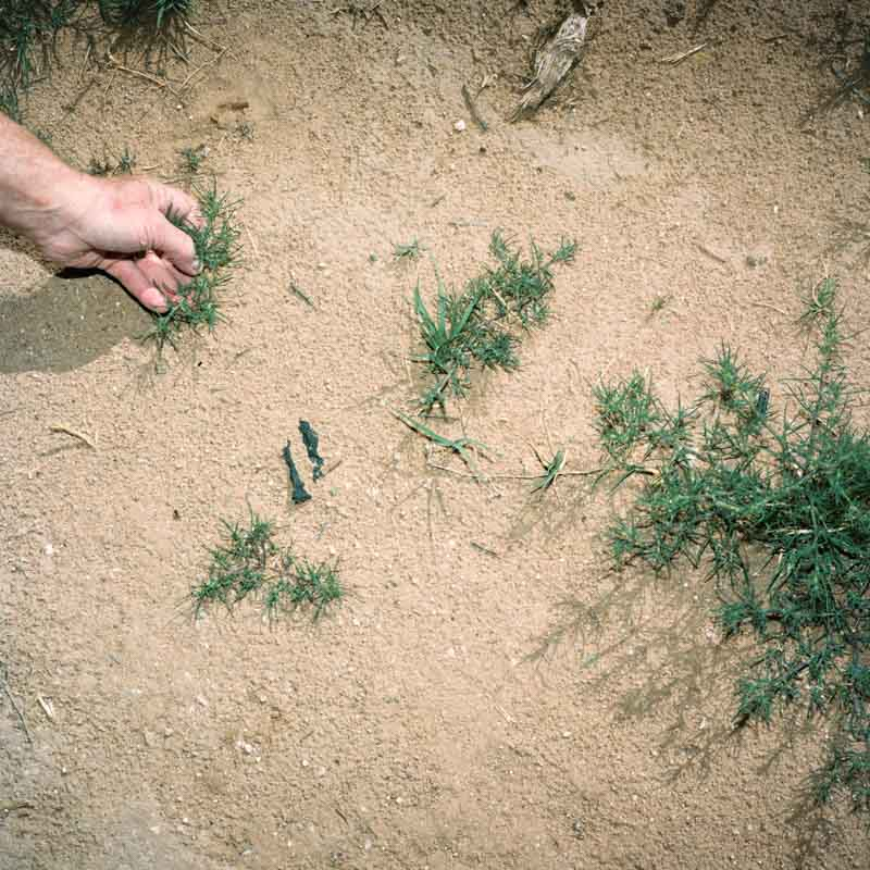 Hand forages green tumbleweeds